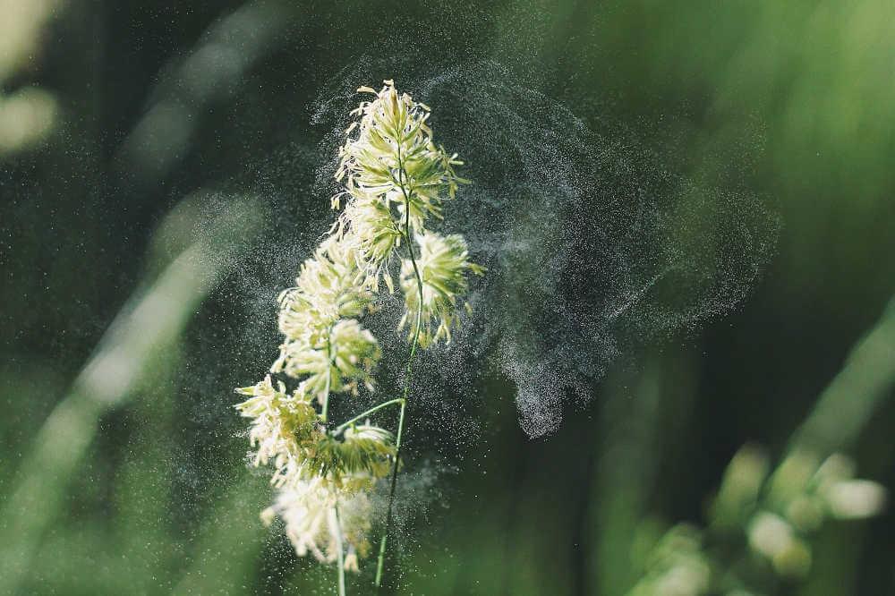 Luftreiniger Pollen - gegen Pollenallergie