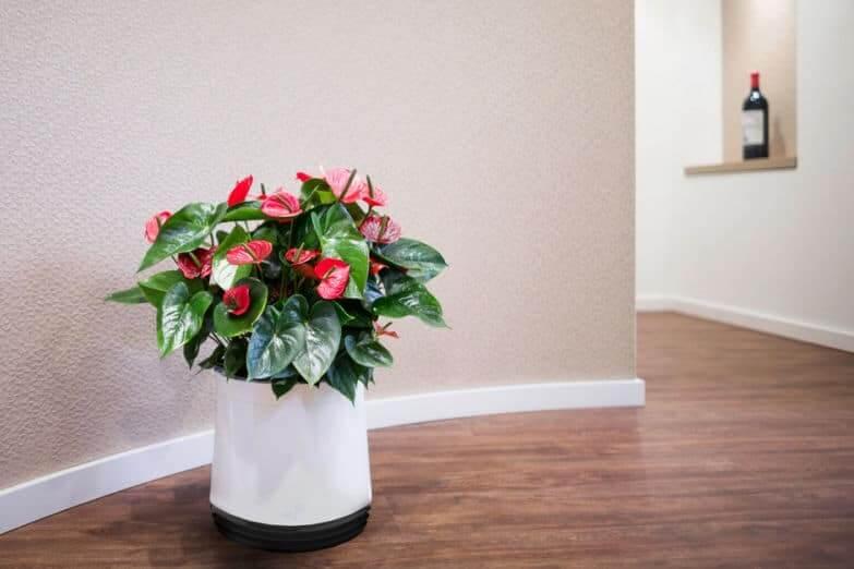 AIRY Luftreiniger: Der Turbo-Topf für luftreinigende Pflanzen