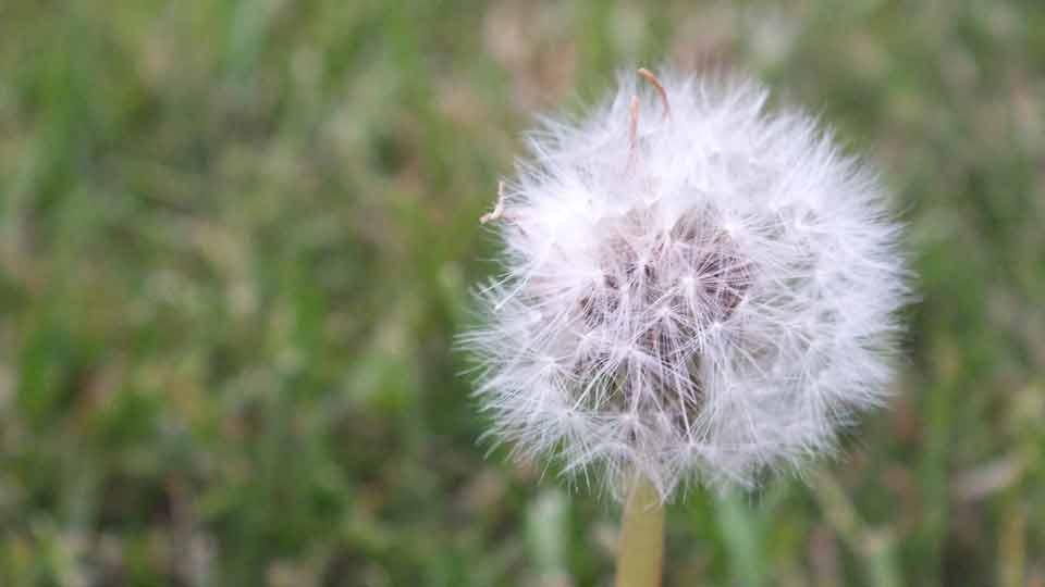 Luftreiniger gegen Pollen